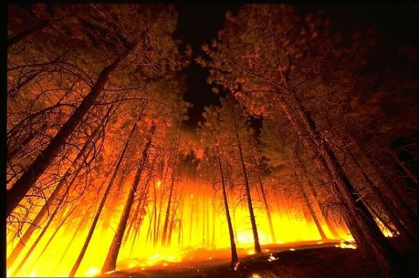 Um incêndio florestal.