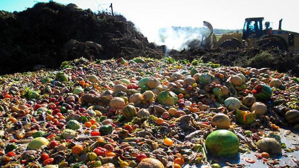 Desperdício de alimentos em um mundo com fome